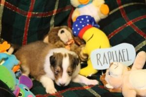 Raphael 1