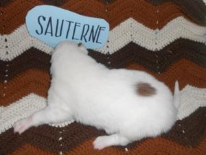 Sauterne 2