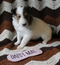 Daisy Mae 1