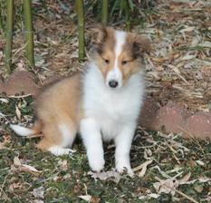 Lassie 002