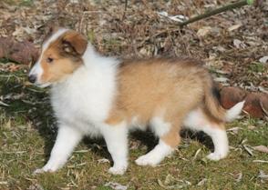 Lassie 005
