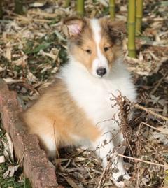 Lassie 028