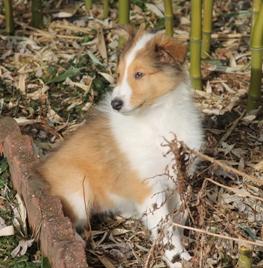 Lassie 029