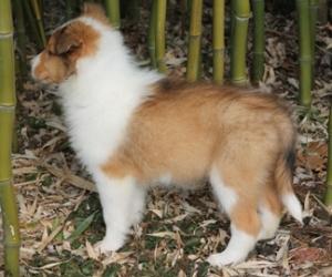 Lassie 031