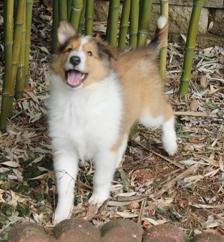 Lassie 036