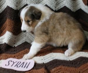 Syrah 1